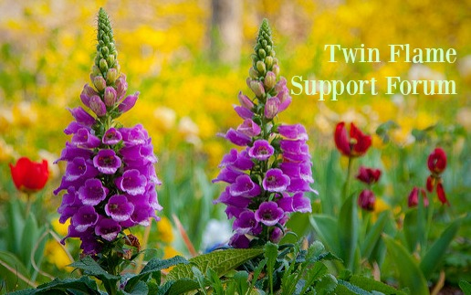 Twin Flame Support Forum